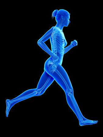 scheletro umano: donna in esecuzione - anatomia visibile dello scheletro