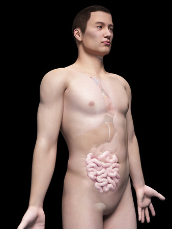 illustration of the intestine of an asian male guy illustration