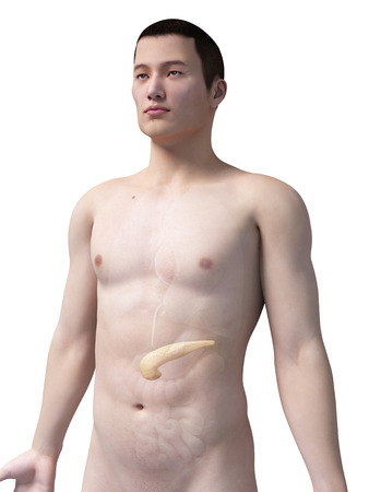 pancreatitis: illustration of the pancreas of an asian male guy