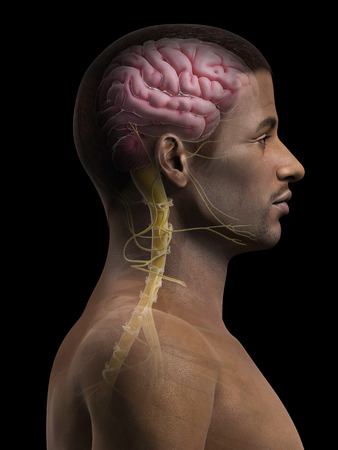 anatomy of an african american man - brain and nerves Stock Photo