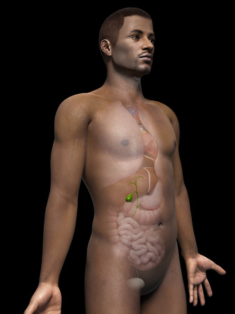 gall: anatomy of an african american man - gallbladder Stock Photo