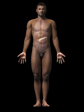 pancreatitis: anatomy of an african american man - pancreas Stock Photo