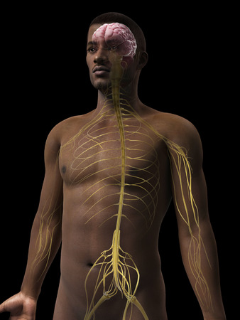 sacral nerves: anatomy of an african american man - nerves Stock Photo