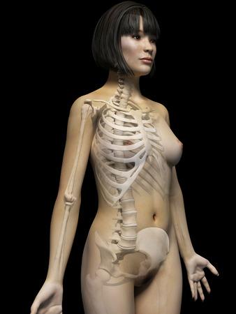 anatomy of an asian woman - skeleton