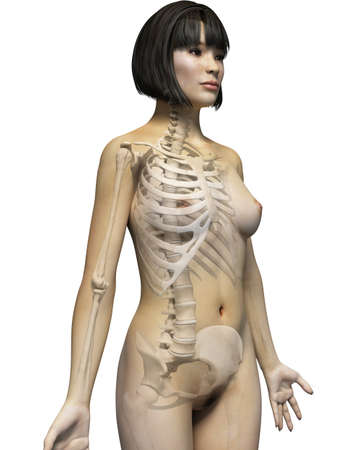 anatomy of an asian woman - skeleton photo
