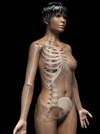 anatomy of an african american woman - skeleton