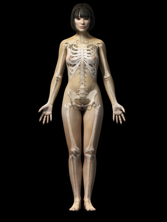 sternum: anatomy of an asian woman - skeleton