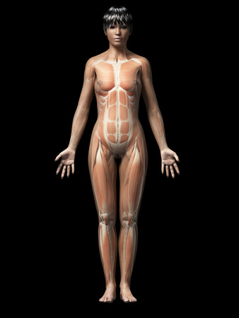 anatomy of an african american woman - muscles photo