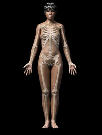 huesos humanos: anatomía de una mujer afroamericana - esqueleto