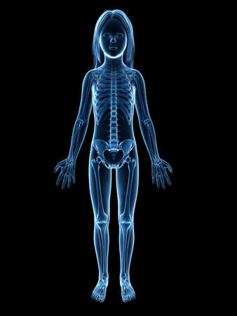 anatomy of a young girl - skeleton photo