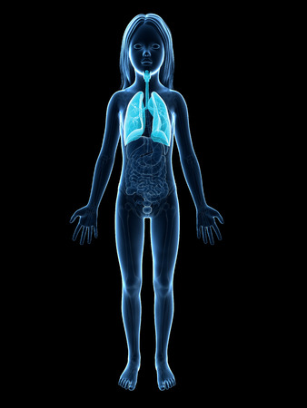 airways: anatomy of a young girl - the lung Stock Photo
