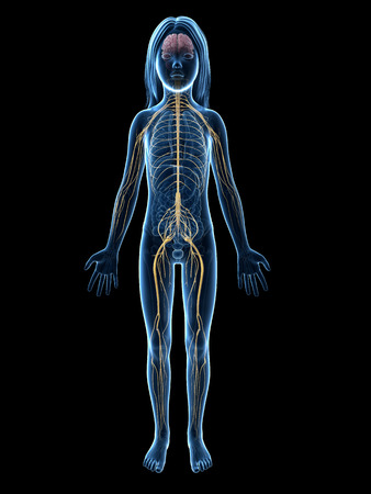 nervous: anatomy of a young girl - nervous system Stock Photo