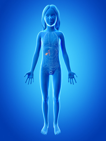 anatomy of a young girl -  the gallbladder Stock Photo - 26947320