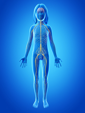 sacral nerves: anatomy of a young girl - nervous system Stock Photo