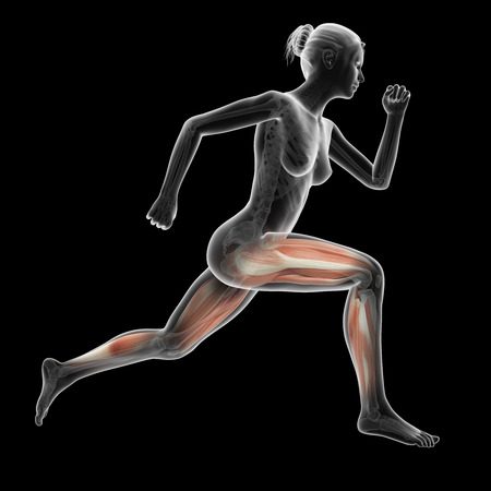 anatomy muscles: illustration of a running woman - visible leg muscles