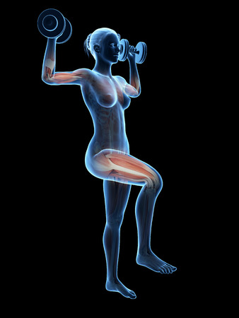 female muscle: anatomical illustration of a woman working out