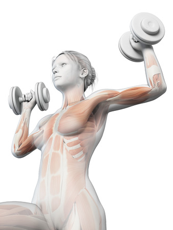 working out: anatomical illustration of a woman working out