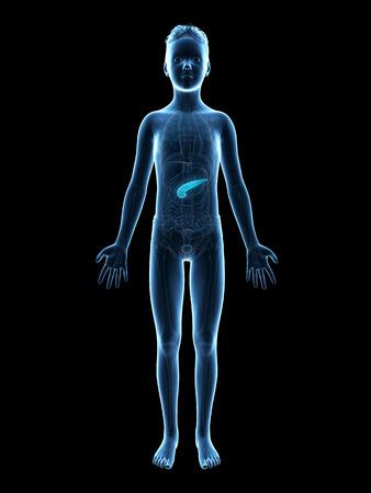 pancreatitis: anatomy of a young boy - the pancreas Stock Photo