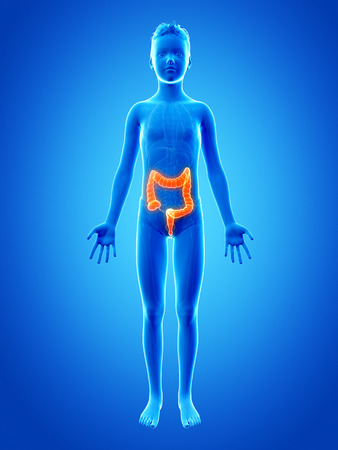 large intestine: anatomy of a young boy - the colon Stock Photo