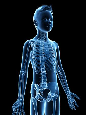 anatomy skeletal: anatomy of a young boy - the skeleton