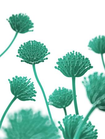 toxin: scientific illustration - aspergillus mold