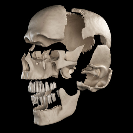 exploded: anatomy illustration showing the parts of the human skull