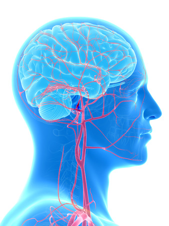 healthy arteries: medical illustration of the brain and head arteries