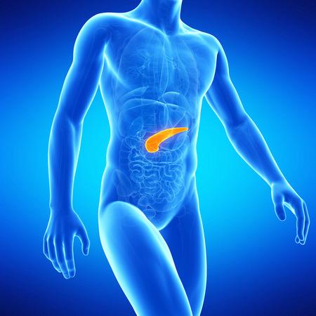 insulin: medical illustration of the human pancreas Stock Photo