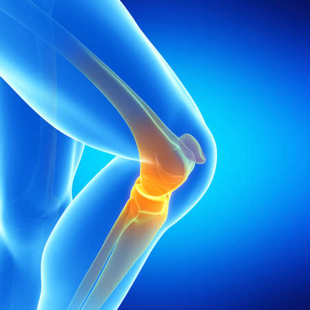 patella: medical illustration of the knee joint