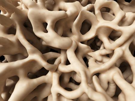 ilustración médica de la estructura ósea saludable