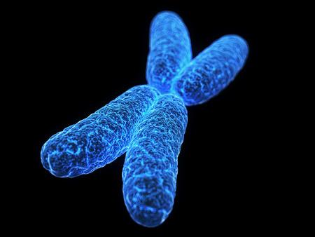 clone: medical illustration of a x-chromosome Stock Photo