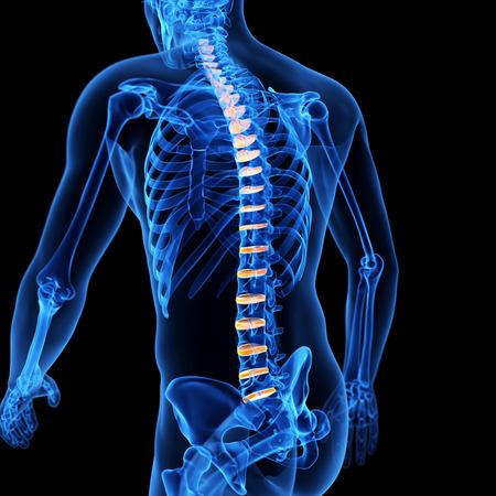 discs: medical illustration of the intervertebral discs Stock Photo