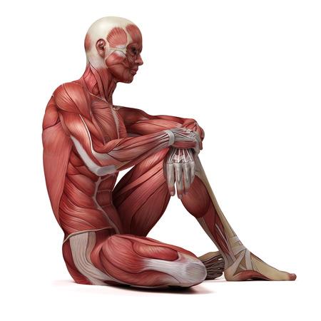 3d illustration médicale du système musculaire mâle