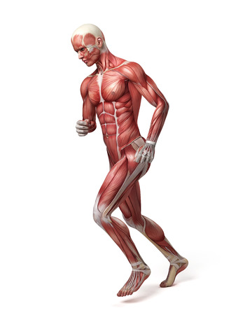medical 3d illustration of the male muscular system Stock Photo