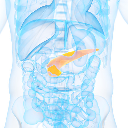 medical 3d illustration of the pancreas Stock Photo