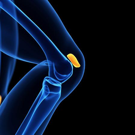 knee cap: medical illustration of the knee cap