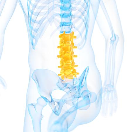 lumbar: medical 3d illustration of the lumbar spine