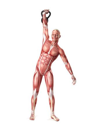 high detail: medical 3d illustration of a kettlebell exercise