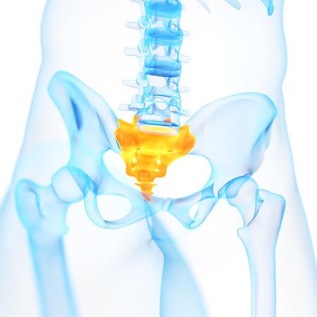 sacrum: medical 3d illustration of the sacrum