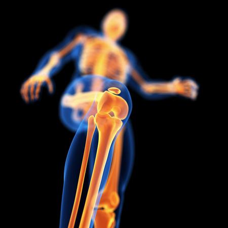 knee: medical 3d illustration of skeletal knee Stock Photo