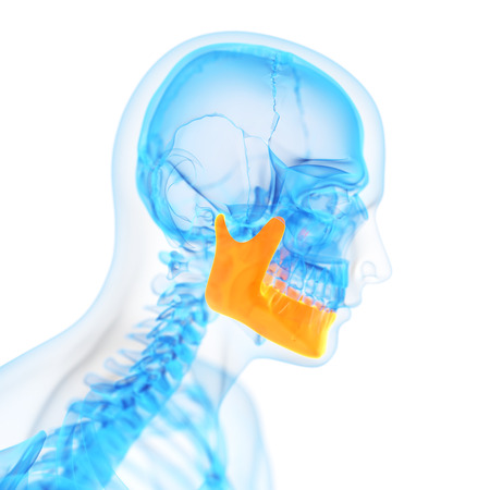 with orange and white body: medical 3d illustration of the jaw bone