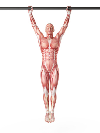 raises: exercise illustration - hanging leg raises