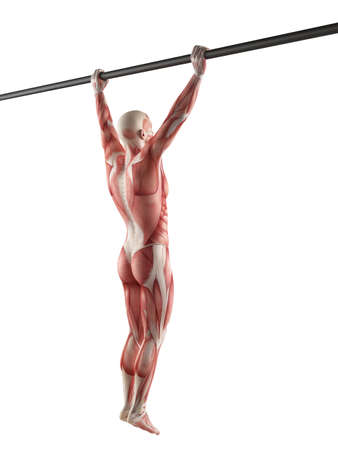 grip: exercise illustration - wide grip pull ups Stock Photo