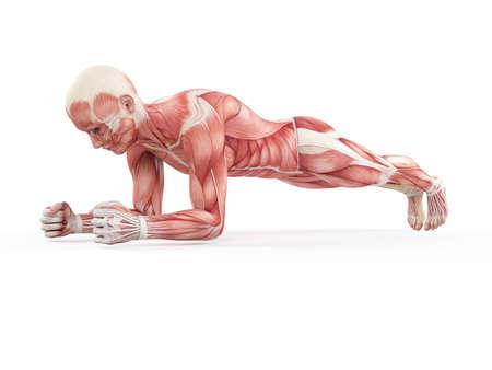 abdominal fitness: ejercicio ilustración - tablón