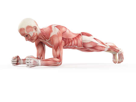 male anatomy: exercise illustration - plank