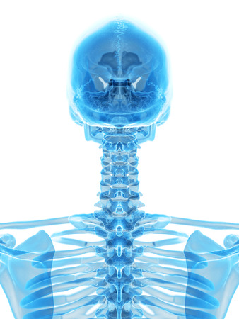 cervical: medically accurate illustration of the cervical spine