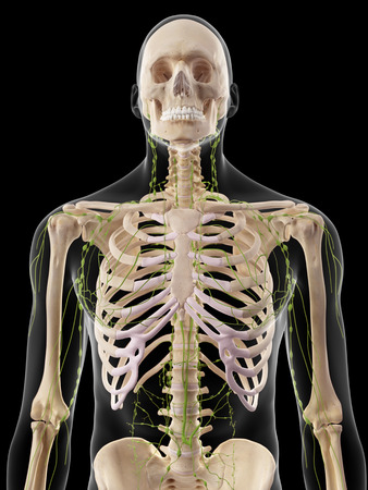 axillary: medically accurate illustration of the lymphatic system