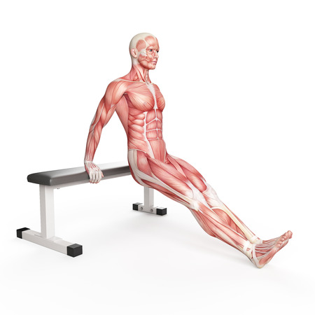 strong men: exercise illustration - bench dip Stock Photo
