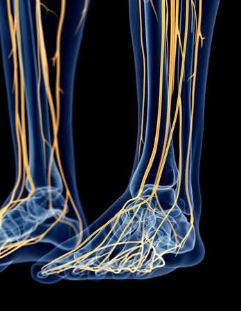 black toes: medically accurate illustration of the foot nerves Stock Photo