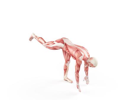 anatomie humaine: exercice illustration - une goutte de la jambe